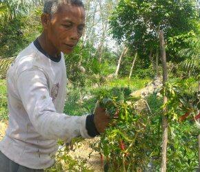 Permalink ke Puluhan Tahun Bertani, Jaelani Tak Pernah Dapat Bantuan Pemerintah