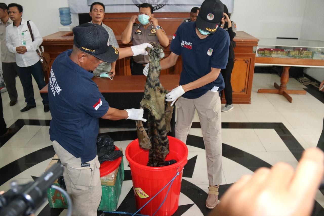 Permalink ke Ditreskrimsus dan BKSDA Gagalkan Penjualan Kulit Harimau