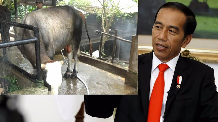 Permalink ke Presiden Jokowi Kurban Seekor Sapi di Jambi Berbobot Hampi 1 Ton