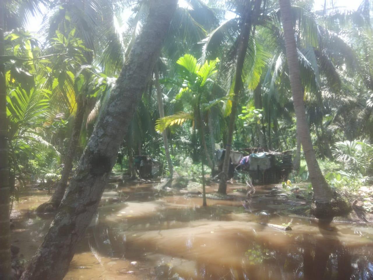 Permalink ke Pemilik Kebun yang Terendam Banjir di Tungkal Ilir Harapkan Solusi Pemerintah