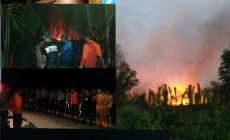 Permalink ke Breaking News: 200 Hektare Lahan di Tanjabbar Terbakar