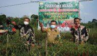 Permalink ke Alharis Tanam Kedelai dan Panen Cabe di Bungo Sekaligus Serahkan Bantuan Sarana Produksi Kacang