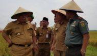 Permalink ke Akhir Tahun Ini Pemkab dan TNI Perluas Area Cetak Sawah