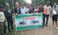 Permalink ke Berburu Babi, PORDI Tanjabbar Selusur Lahan Kebun di Kecamatan Betara