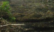 Permalink ke Kuasa, H.A.Gafar Akan laporkan Kelompok Tani Teluk jaya Ke Bupati Diduga Terkait Menyerobotan lahan