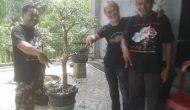 Permalink ke BBC Kecamatan Betara Buka Pameran Bonsai dan Demo Kreatifitas