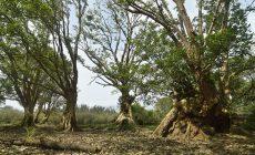 Permalink ke Wisata Pulau Kelalawar Nan Eksotis Desa Koto Tuo dan Desa Ujung Pasir