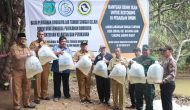 Permalink ke Bupati Safrial Tebar 30.000 Benih Ikan Air Tawar di Desa Suban