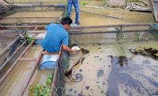 Permalink ke Soal Dugaan Limbah Cair Cemari Sungai, Pihak PT. ABP Terkesan Tutup Mata