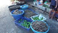 Permalink ke Dampak Virus Corona, Harga Jahe di Batanghari Naik Jadi Rp 60 Ribu Perkilo