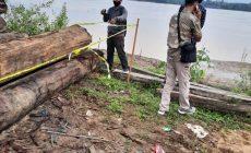 Permalink ke Puluhan Kubik Kayu di Salah Satu Sawmill Dalam Desa Sekernan Dipolice line
