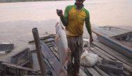 Permalink ke Idul Adha Membawa Berkah, Pancing Warga Sekernan Kena Ikan Patin Besar di Sungai Batanghari