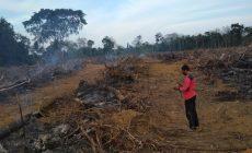 Permalink ke 8 Titik Api Ditemukan di 7 Kecamatan di Batanghari
