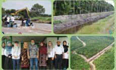 Permalink ke Pembangunan Tanggul Sungai Simpang Kiri yang Ditinjau Bupati Romi Memberi Manfaat Ganda bagi Warga