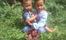 Permalink ke Bunga Bangkai Tumbuh di Desa Sekernan