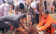 Permalink ke Didampingi Wabup Hairan, Bupati Anwar Sadat Sembelih Sendiri dua Ekor Sapi Kurban Milik Pemkab