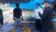 Permalink ke Durian