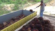 Permalink ke Harga TBSNaik, MFA Imbau Petani Tingkatkan Produksi