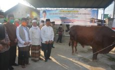 Permalink ke Fachrori Serahkan Sapi Qurban Berbobot 862 kg Bantuan Presiden Jokowi